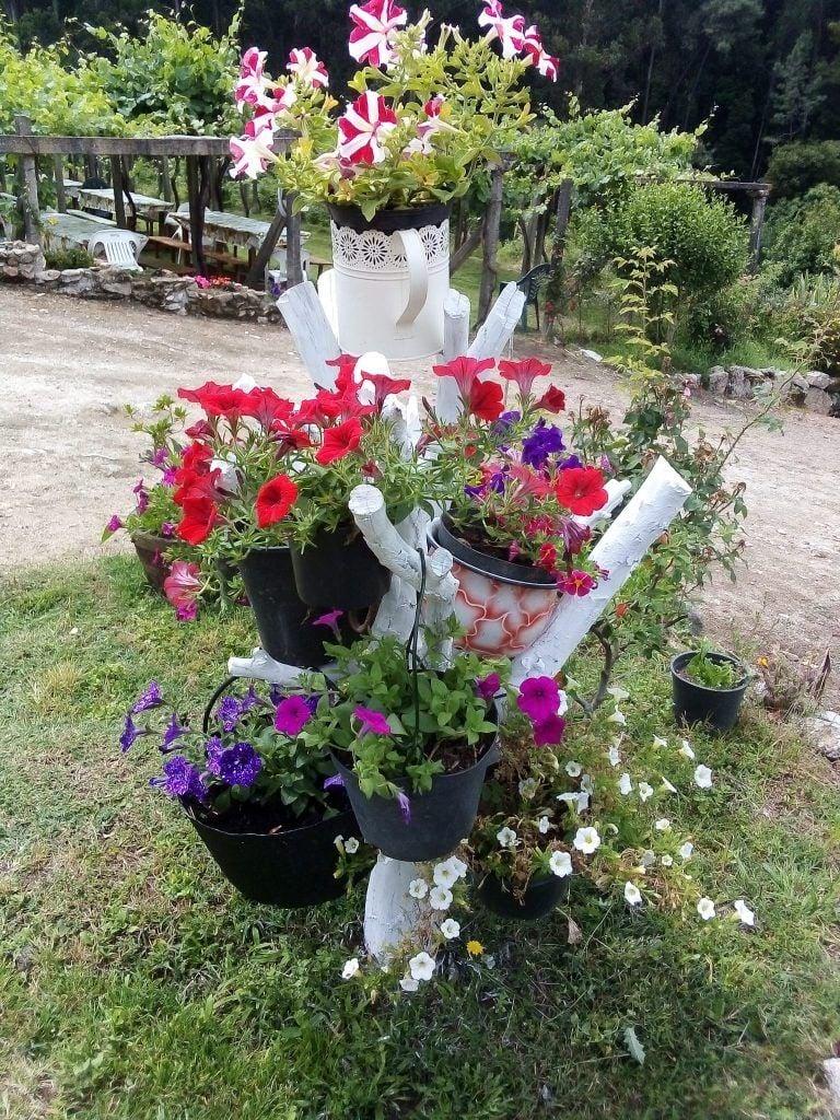 Árbol con flores en el furancho da la pigarreira